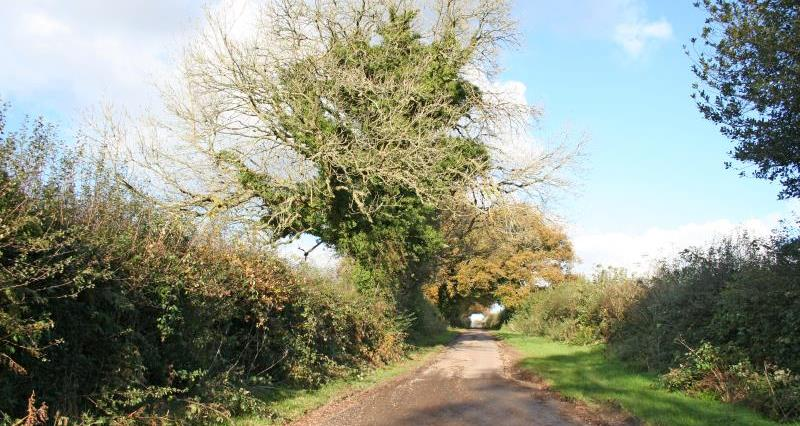 country lane east Hants November_13841