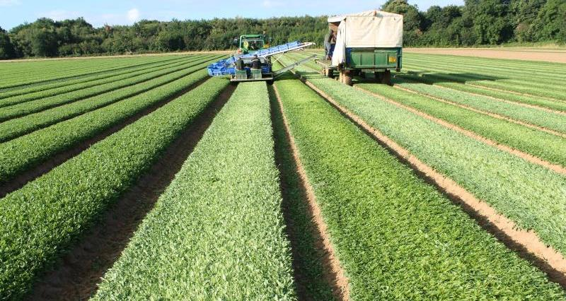 Looking for work in farming and the food industries