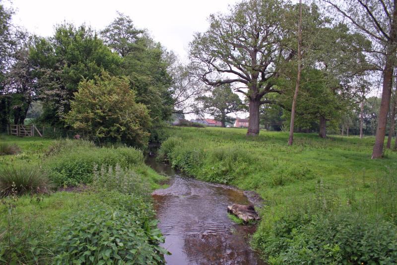River meadow, north Hampshire_14245