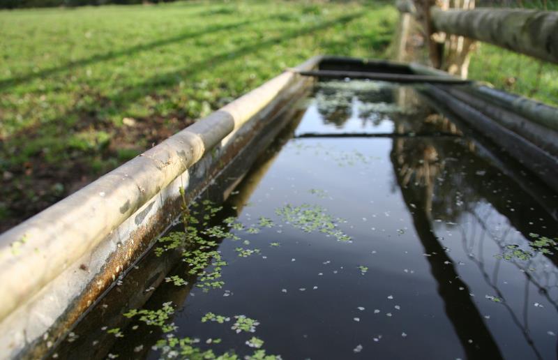 water trough field_48167