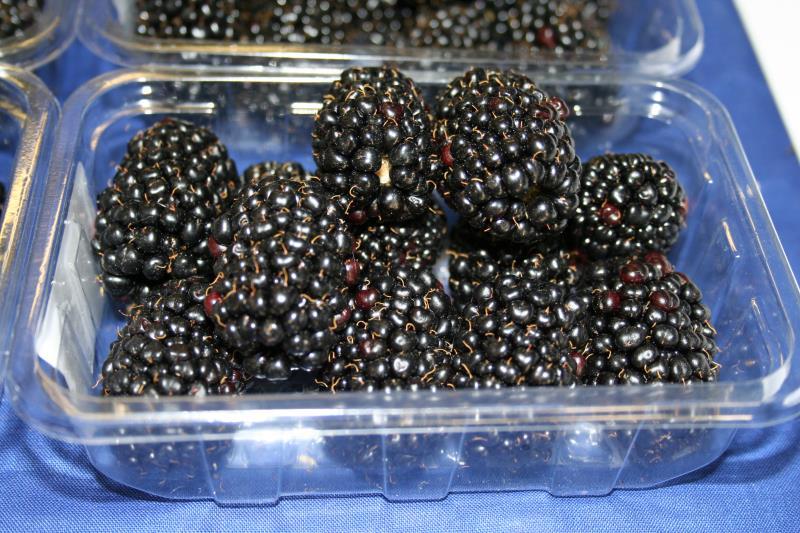 blackberries in tray_12101