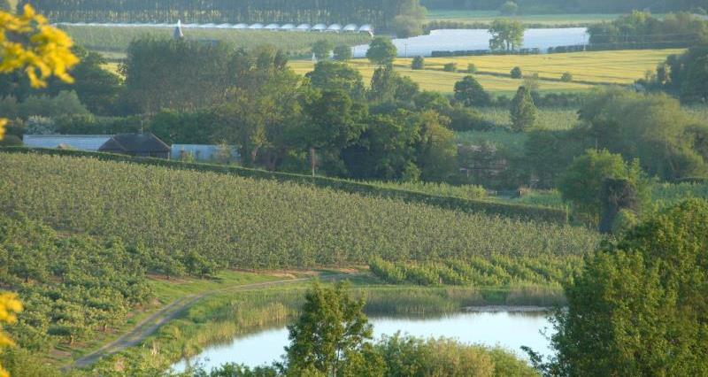 Kent landscape polytunnels & reservoir_14727