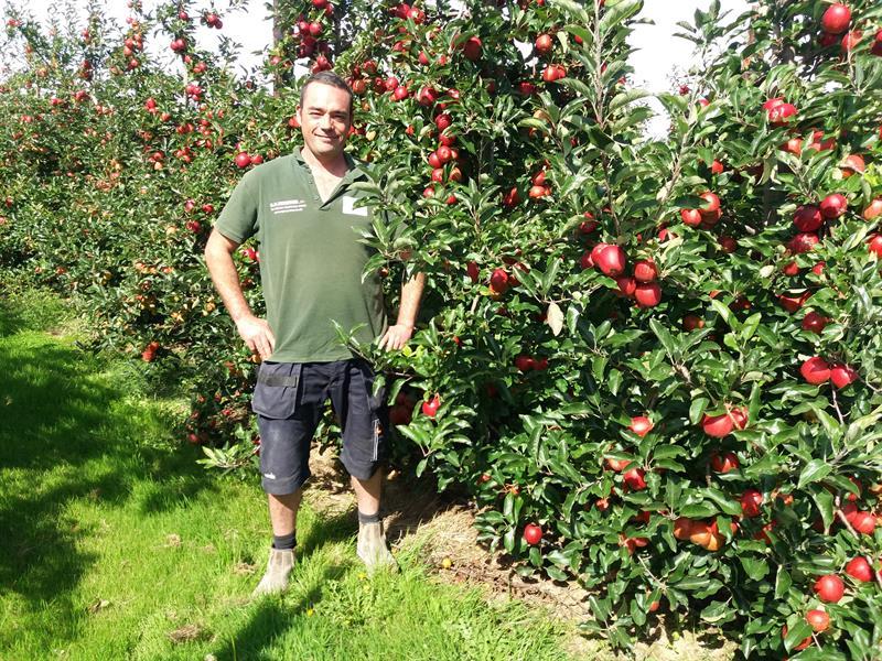Tom Hulme apples Kent 18_61103