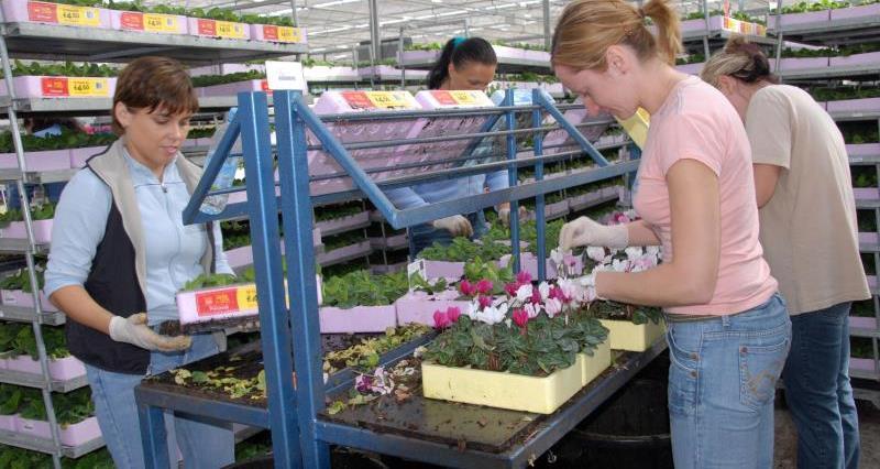 Seasonal workers at a plant nursery _12022