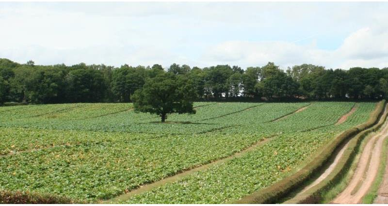 Vegetable field in Nottinghamshire_14590