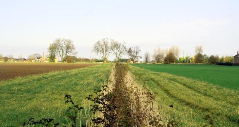 Field margins_14597