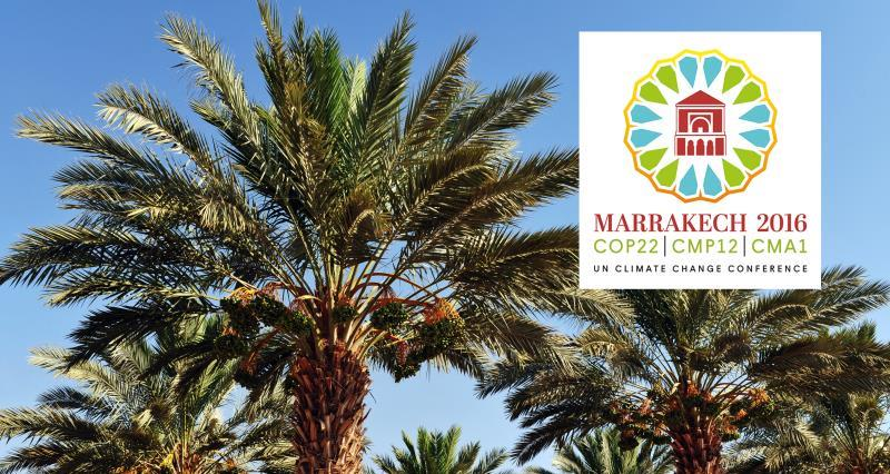 COP22 logo and date palm_38757