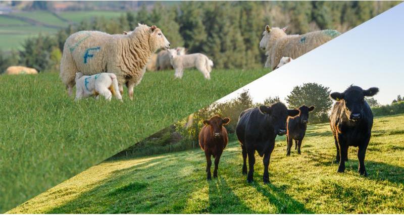 NFU Cyrmru website header image livestock_50140