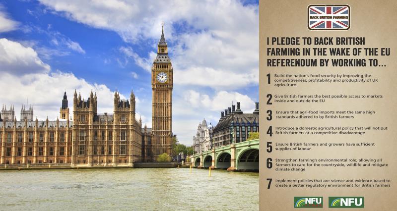 Houses of Parliament BBF pledge Brexit_35798