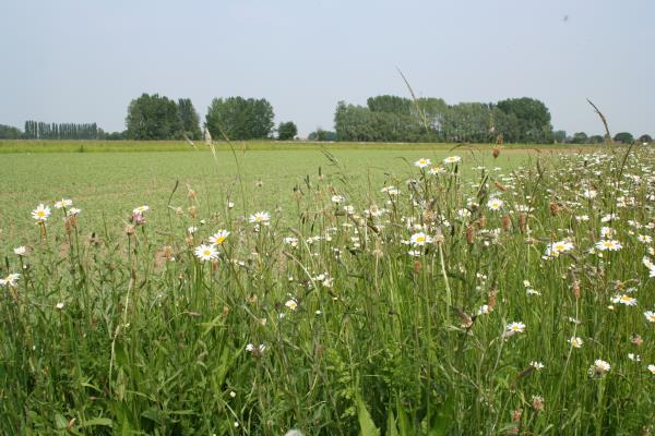 Wildflower zone at Stockbridge_12346