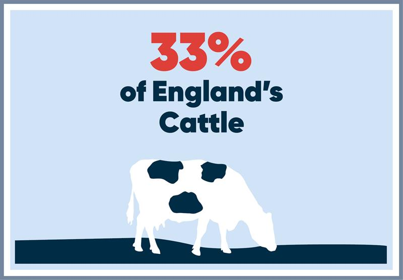 South West infographics cattle_70744