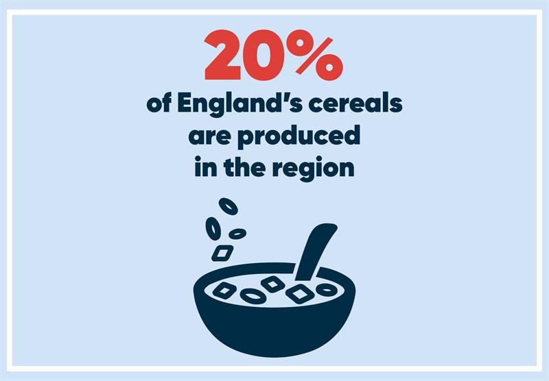 East Midlands infographics cereals_70761
