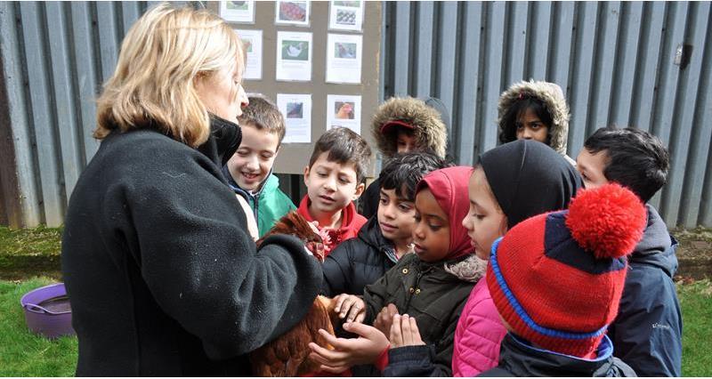 Ronald Ross School visit Paula Matthews' farm in Surrey_61983