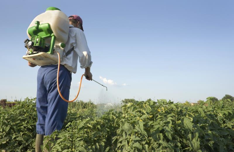 Man spraying vegetables_12323