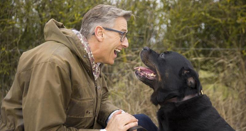 Dogfather training: tackling unwanted behaviour