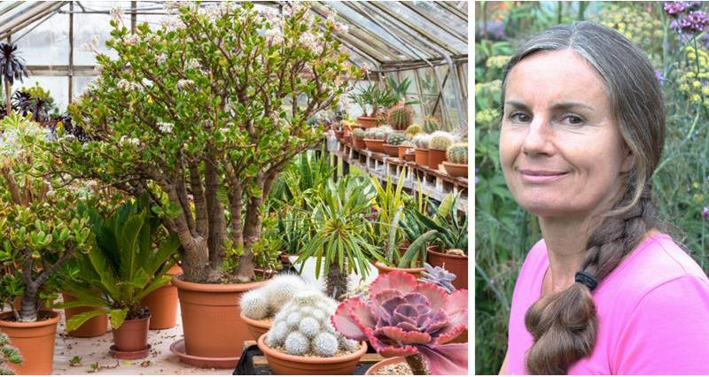 Nicola Stocken and succulents_61559