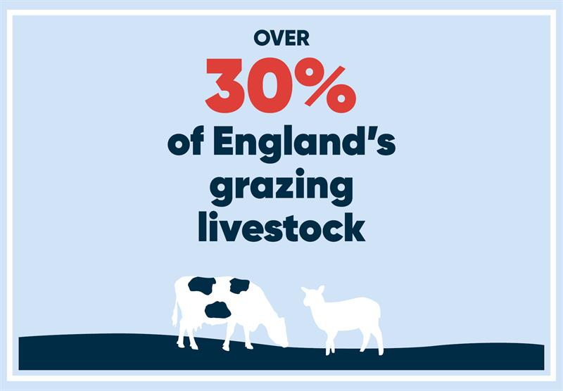 North West infographics livestock_70787