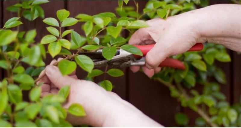 Pruning foliage_67715