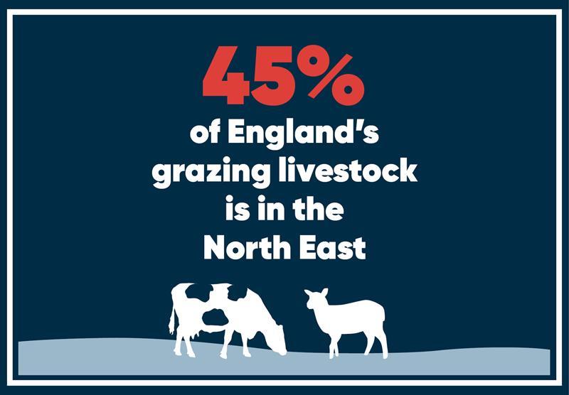 North East infographics livestock_70783