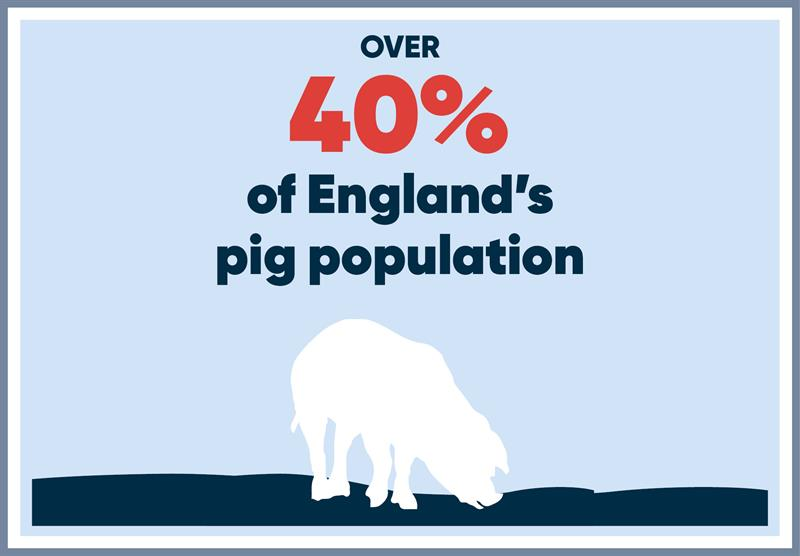 North East infographics pigs_70781