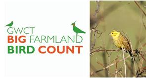 Take part in the 2020 Big Farmland Bird Count