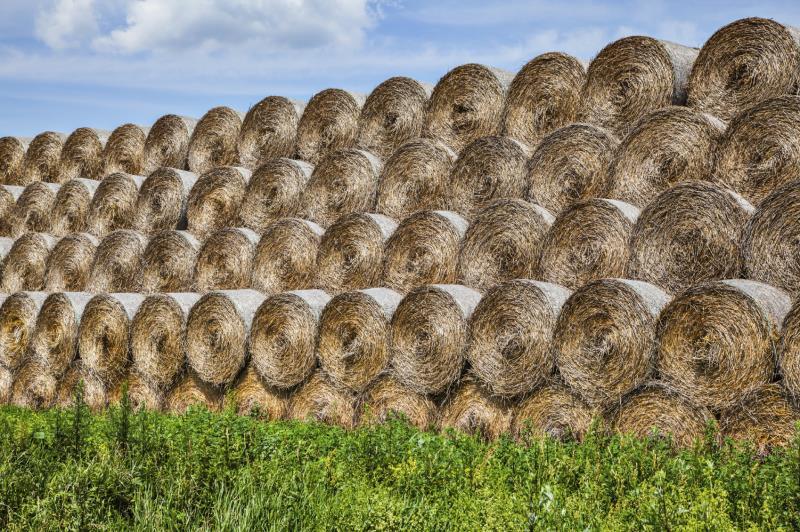 Round hay bales_12336