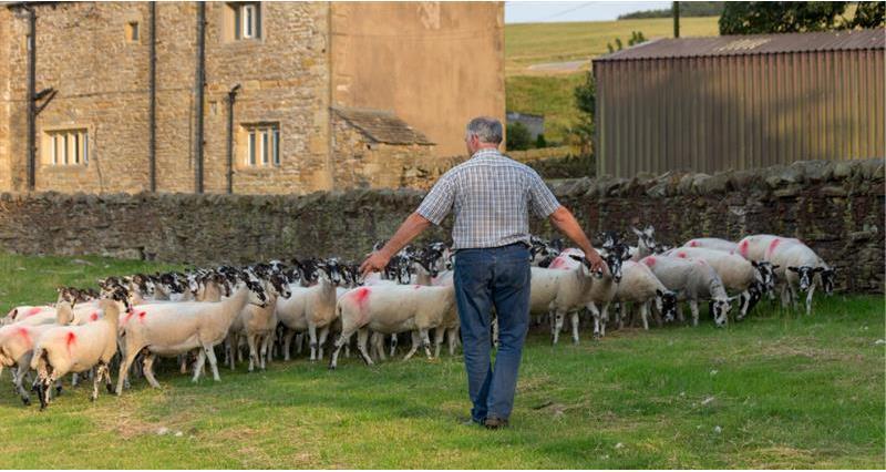 Livestock - The British Livestock industry - FAQs