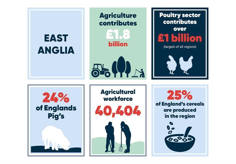 East Anglia infographics main_70753