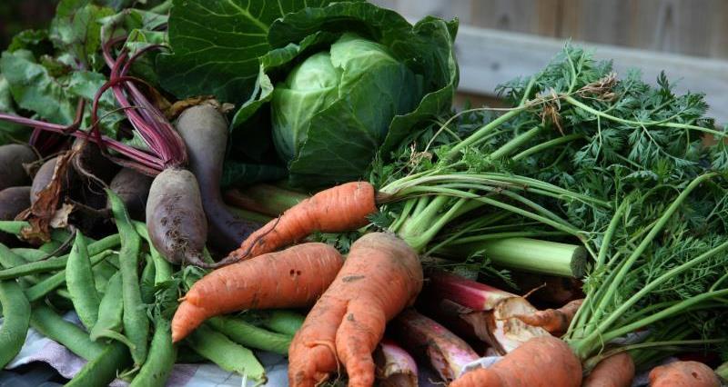 Organic vegetables_12332