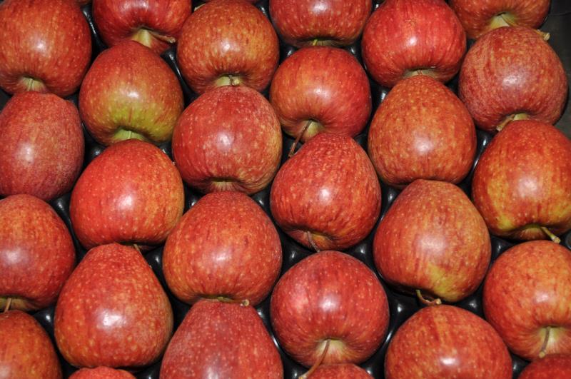 British apples_34529