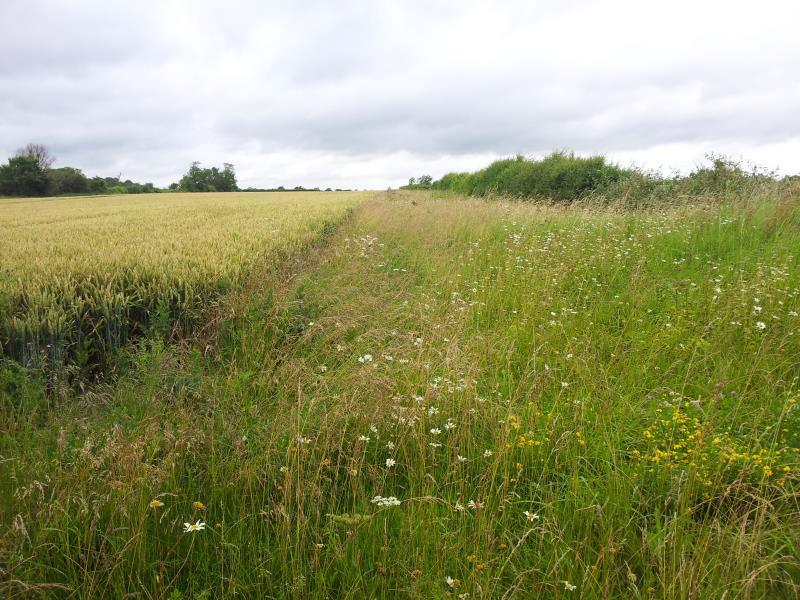 Wildflower margin_12282