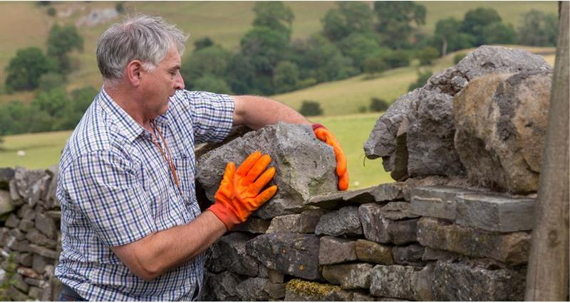 Thomas Binns maintain a dry stone wall in an uplands landscape_59353