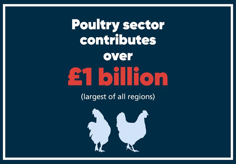 East Anglia infographics poultry_70756