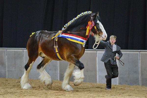 Shire Horse Show_60068