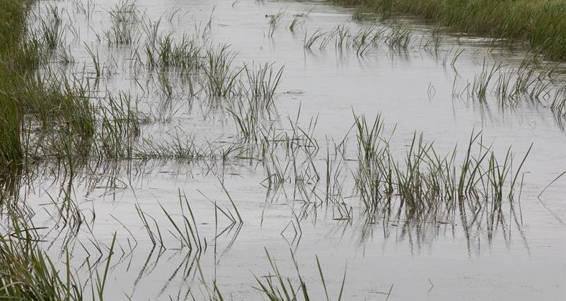Flooded potato crops - Wainfleet flooding_68621