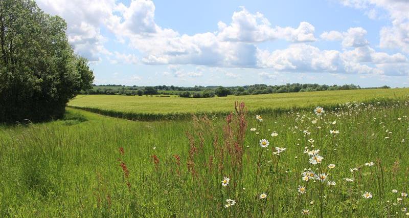 Flower margin country field scene_68711