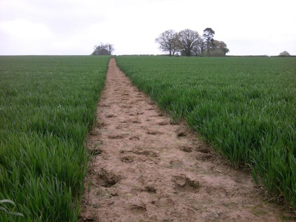 Footpath across field_12588