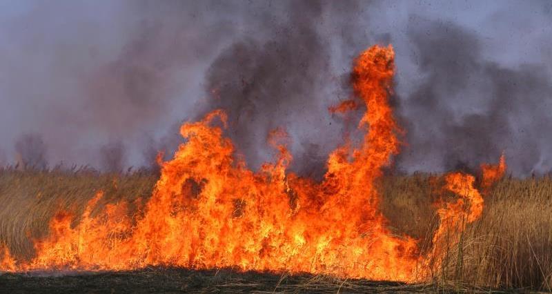 Field fire_7671