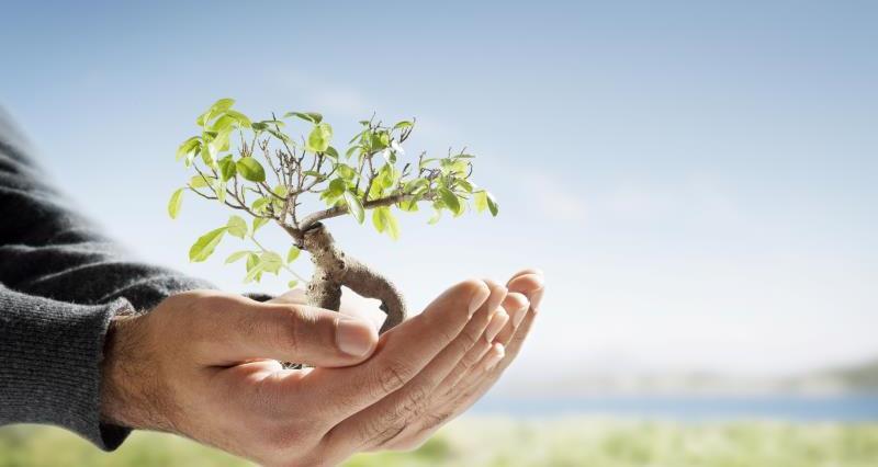 Tree in hands_12662
