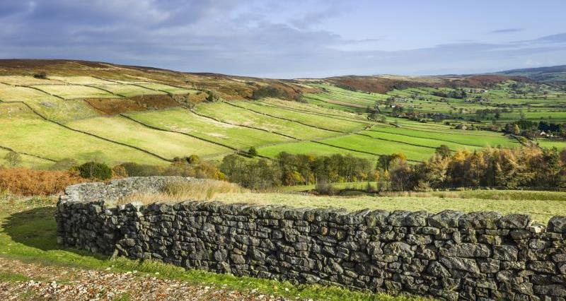 dry stone wall, North York moors_16095