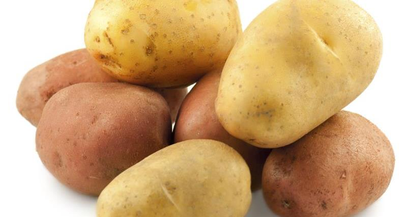 maincrop potatoes_6483