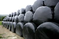 Wrapped silage bales_7862