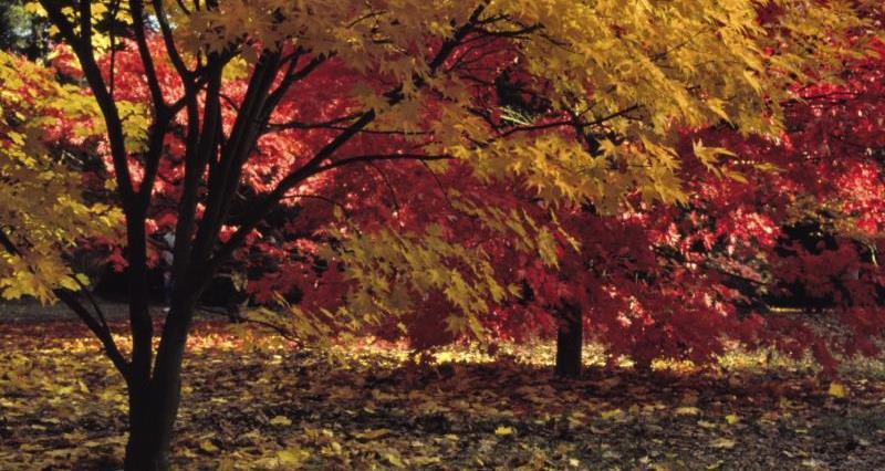 Autumn at Westonbirt Arboretum_13281
