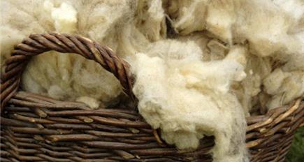 NFU Cymru continues to champion the use of Welsh wool
