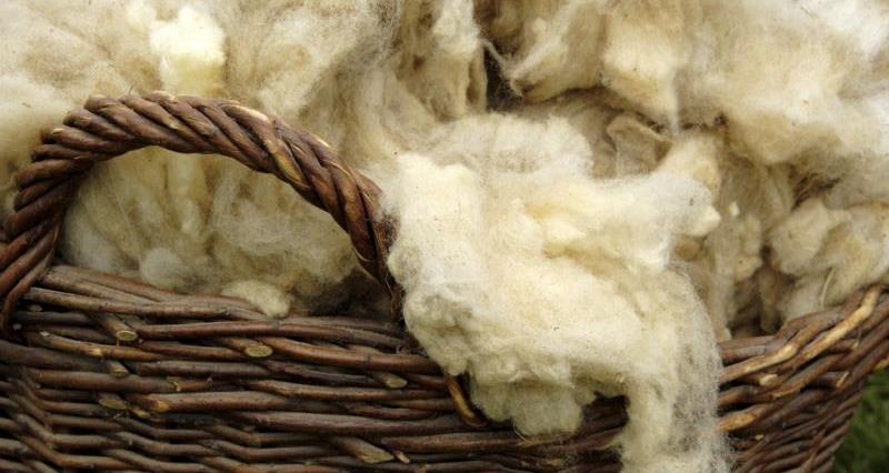 NFU Cymru supports British wool insulation petition