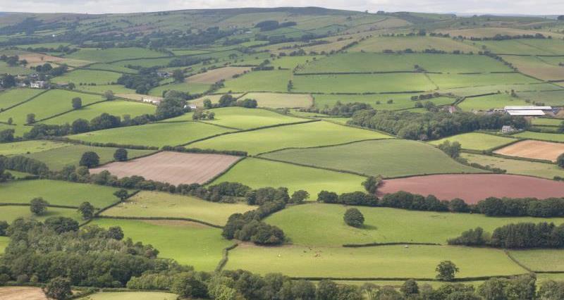 Welsh farmland_17980