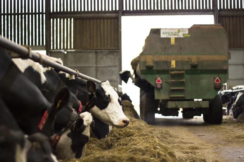 Dairy Cows_18075