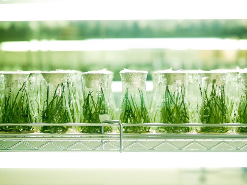Plants in flasks_12667