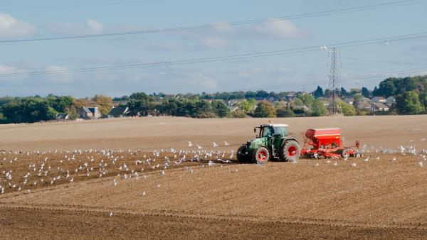 Birds following tractor_13271
