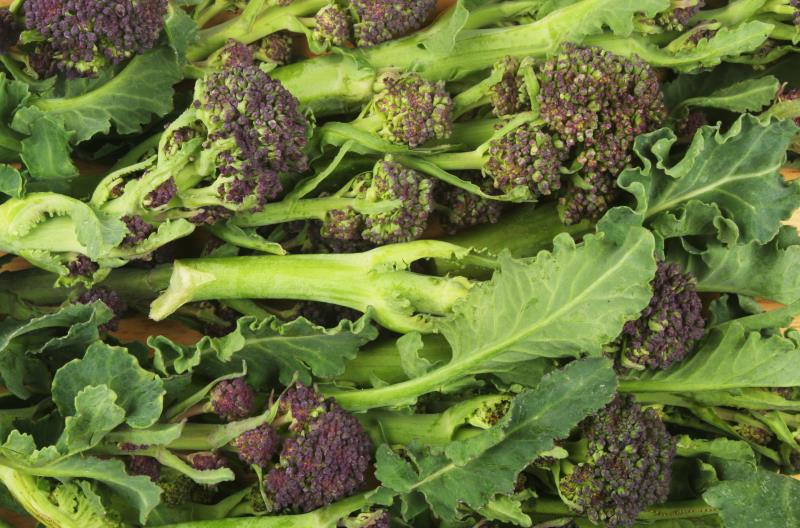 purple sprouting broccoli_11229